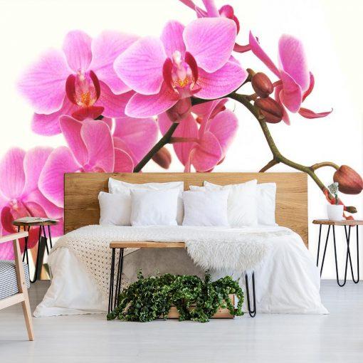 Tapeta z magnoli膮