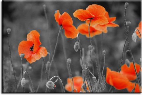 tapety pomara艅czowe kwiaty