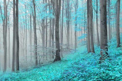 Fototapeta z turkusowym lasem