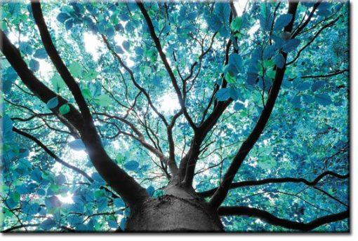 tapety z drzewem