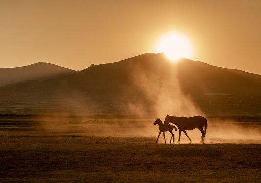Tapeta konie i pustynia