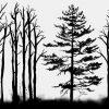 czarno-bia艂a fototapeta z drzewami
