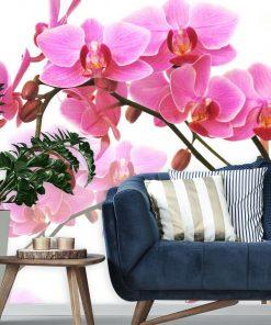 R贸偶owe orchidee - tapeta