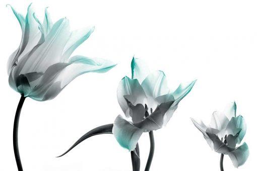 Bia艂e tulipany i niebieski akcent -tapeta
