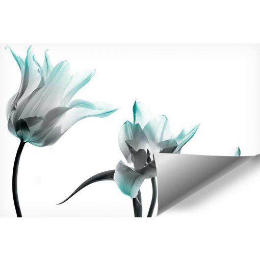 Bia艂e tulipany z niebieskim akcentem