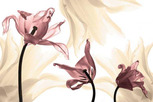 R贸偶owe i 偶贸艂te tulipany - tapeta