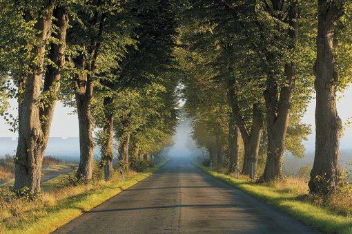 Krajobraz we mgle tapeta
