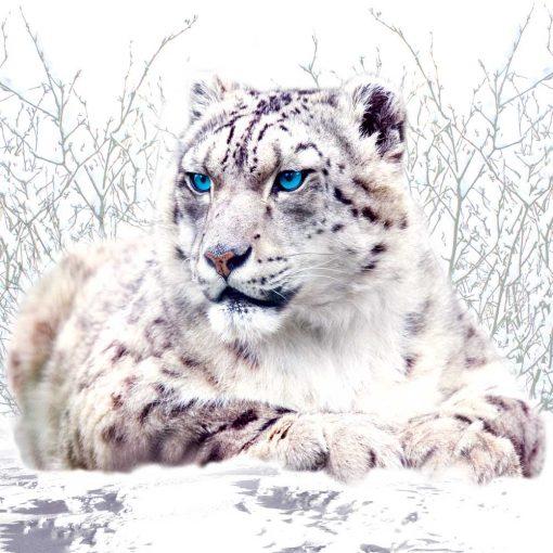 Fototapeta z gepardem