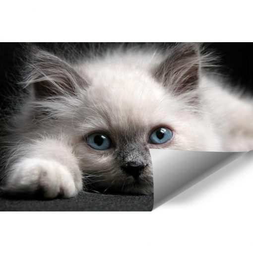 Bia艂y kot na tapecie