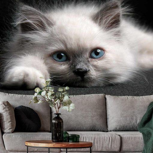 Tapeta z uroczym kotkiem