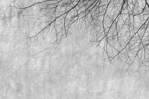 Tapeta z ga艂臋ziami drzew